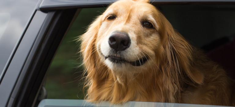 Partir en camping avec son chien : les conseils utiles